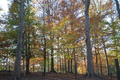 Timberland in St. Helena Parish