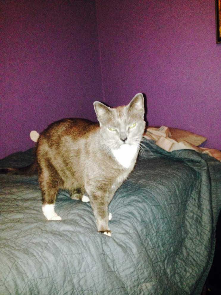 Southeast cats available for June 4, 2015 _lowres