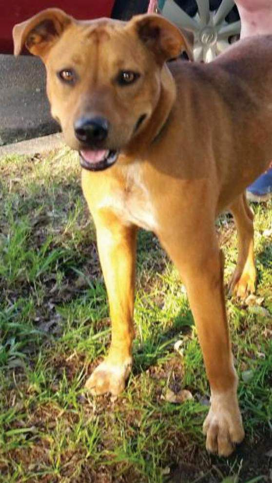 Animal Rescue: Pet hazards may be hiding in plain sight _lowres