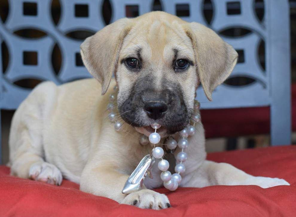Mid City dogs available for June 23, 2016 _lowres