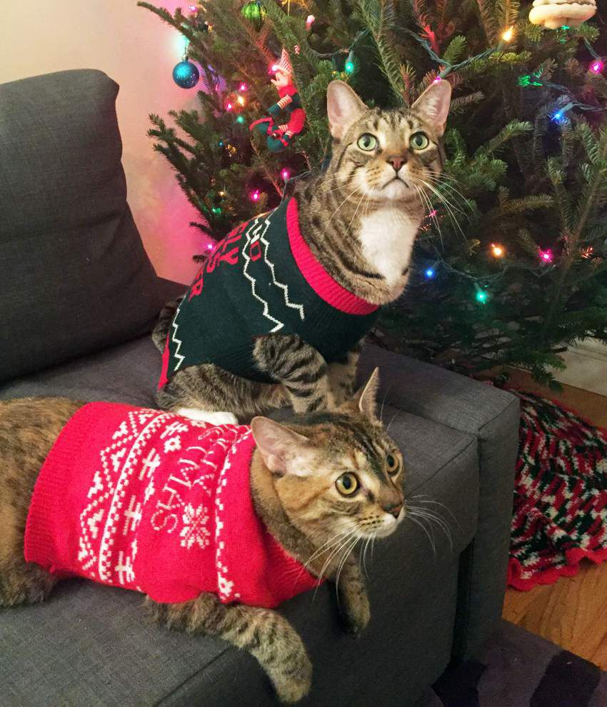 An ugly sweater for a pet? You bet these party animals get into ugly holiday sweater tradition _lowres