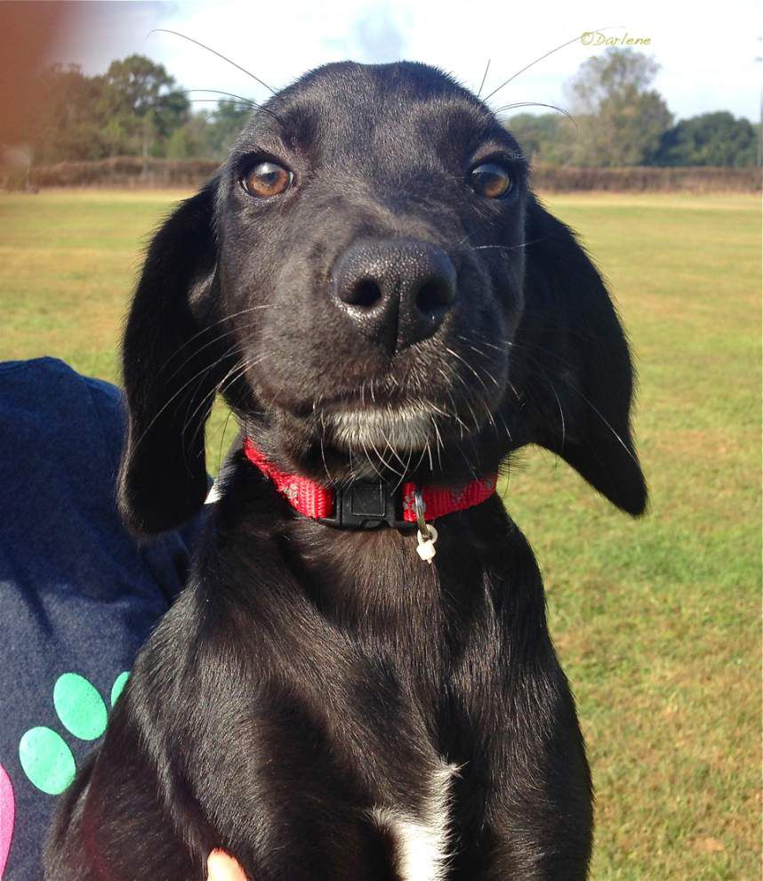 West Feliciana pets for Nov. 6, 2014 _lowres