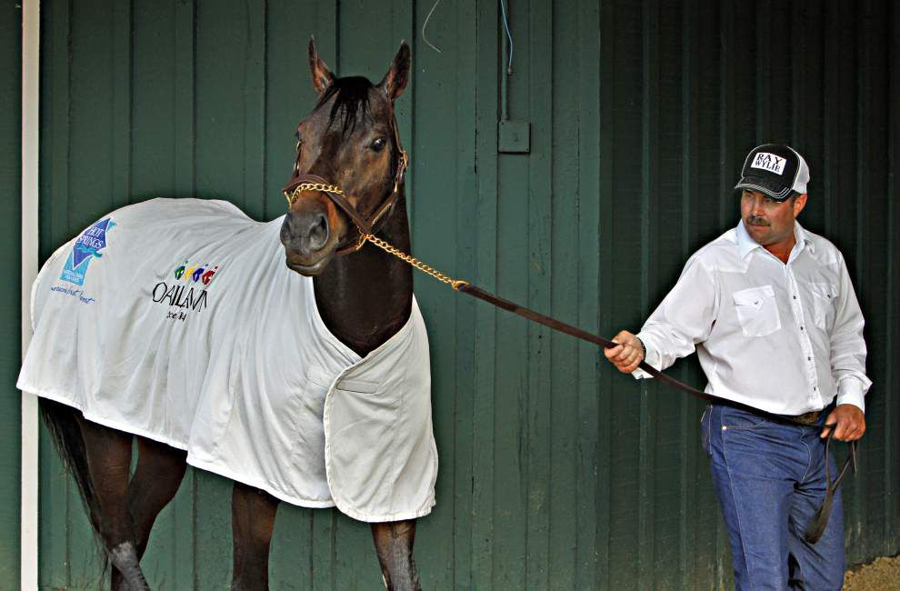 Derby champ California Chrome ready for anything in Preakness _lowres