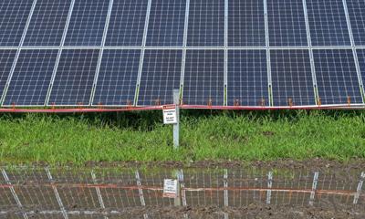 BR.solarfarm.061120. 0020 bf.JPG