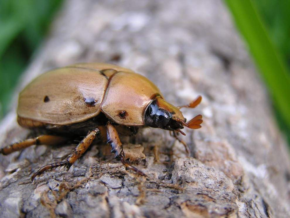 Get up close and personal with bugs, more at Insect Day _lowres