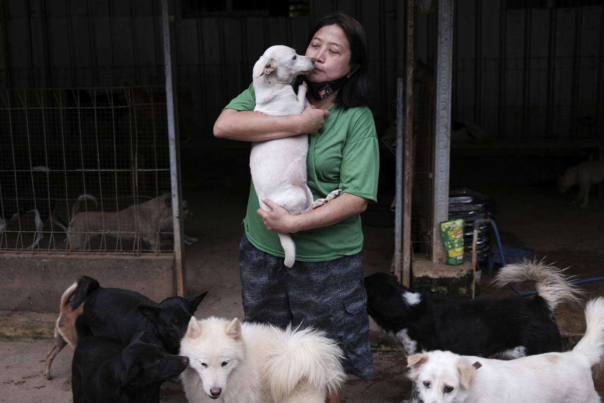 Indonesia Dog Shelter Photo Gallery