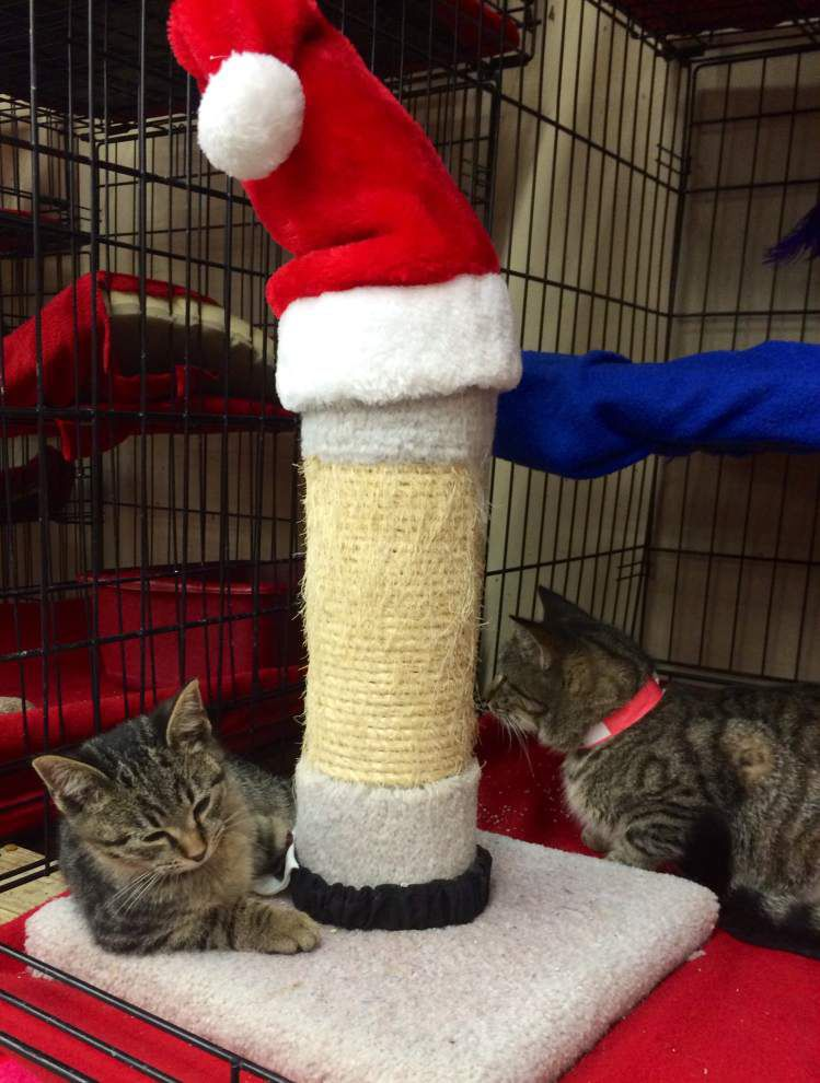 Livingston-Tangipahoa pets available for Dec. 4, 2014 _lowres