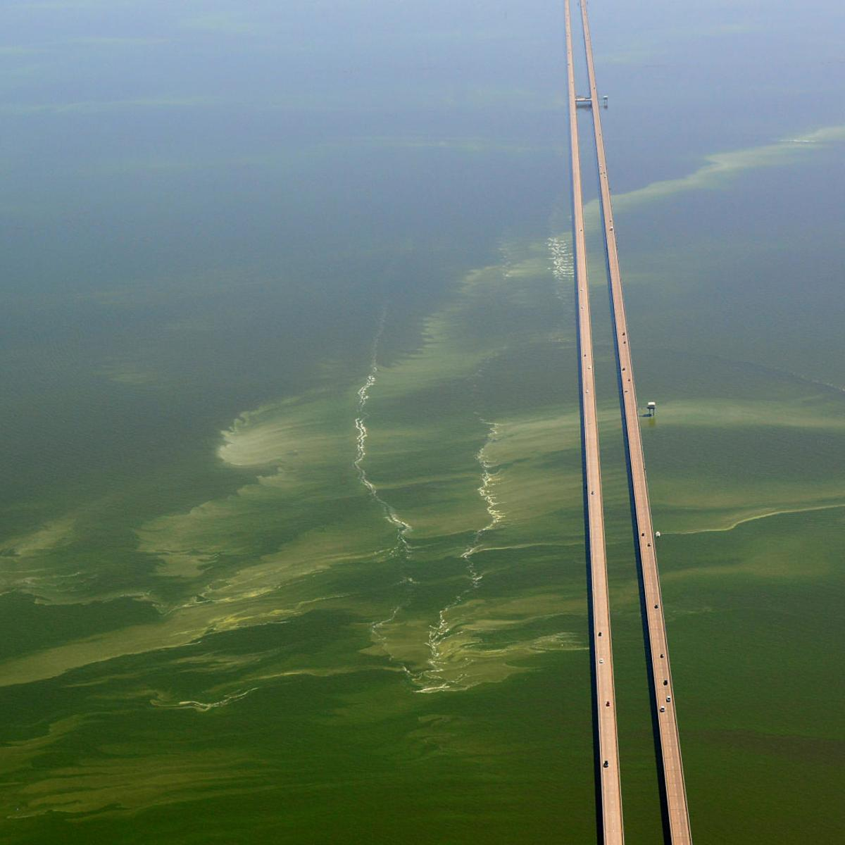 Ahead Of July 4th Weekend Troubling Algae Bloom Closes 4 More