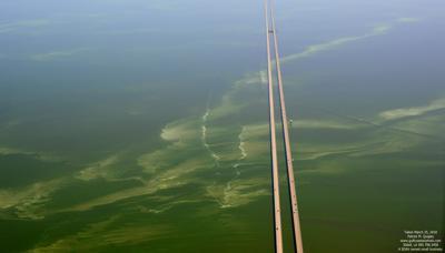Ahead Of July 4th Weekend Troubling Algae Bloom Closes 4 More