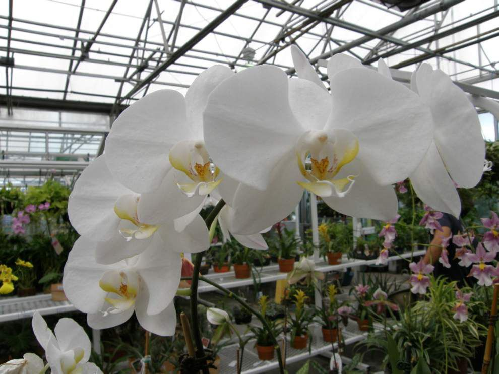Go out and get 'Hooked on Orchids' _lowres