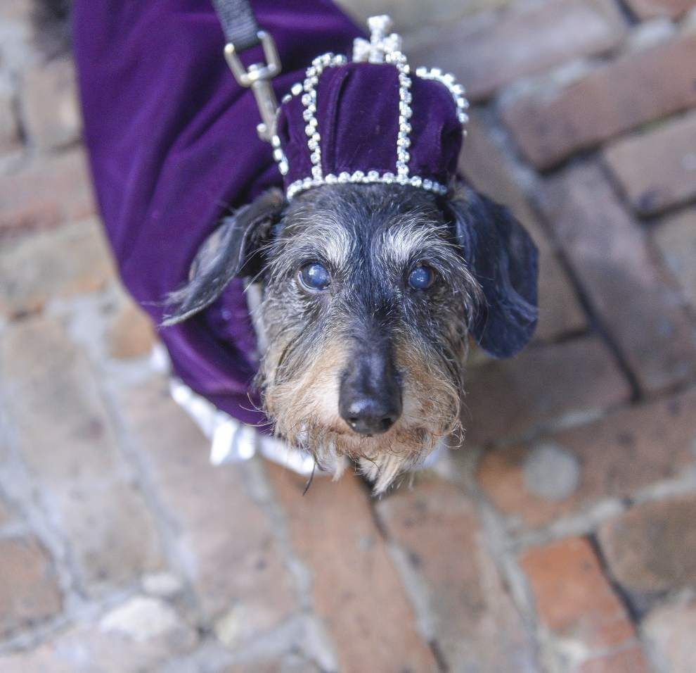 Royal canines meet muzzle to muzzle ahead of Barkus parade _lowres