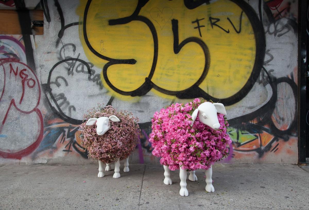 Lewis Miller sheep.jpg
