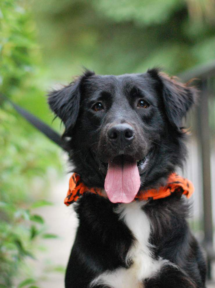 Mid City dogs available for Nov. 5, 2015 _lowres