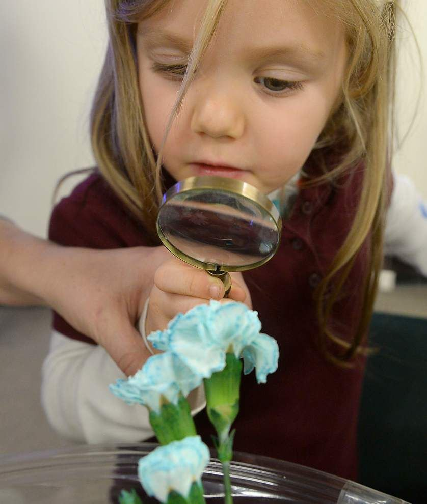 Forestry program teaches children the impact of trees on our lives _lowres