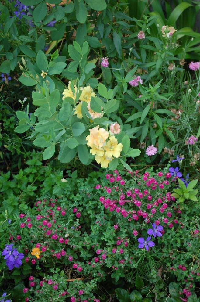 Gardener celebrates the vivid tapestry of spring _lowres
