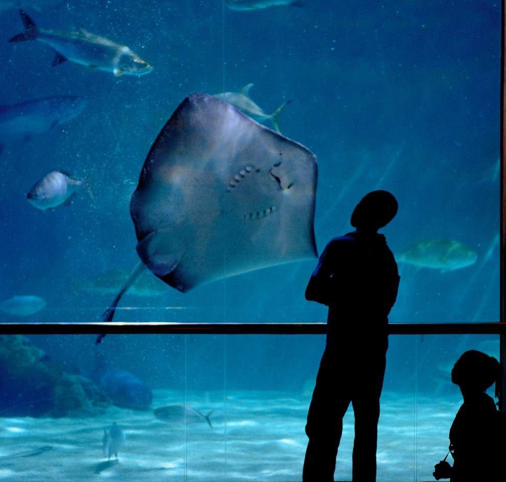 Timeline: A look at Aquarium of the Americas _lowres