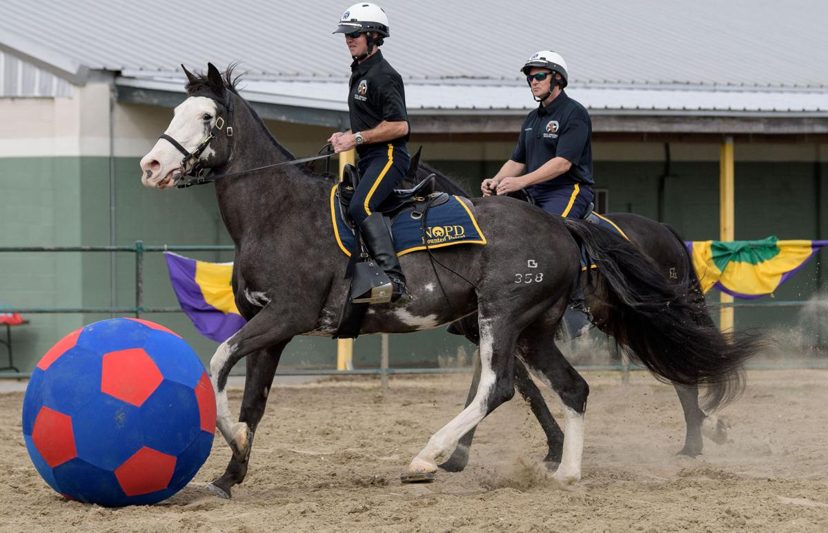 NO.budclydesdales.012518.001.JPG
