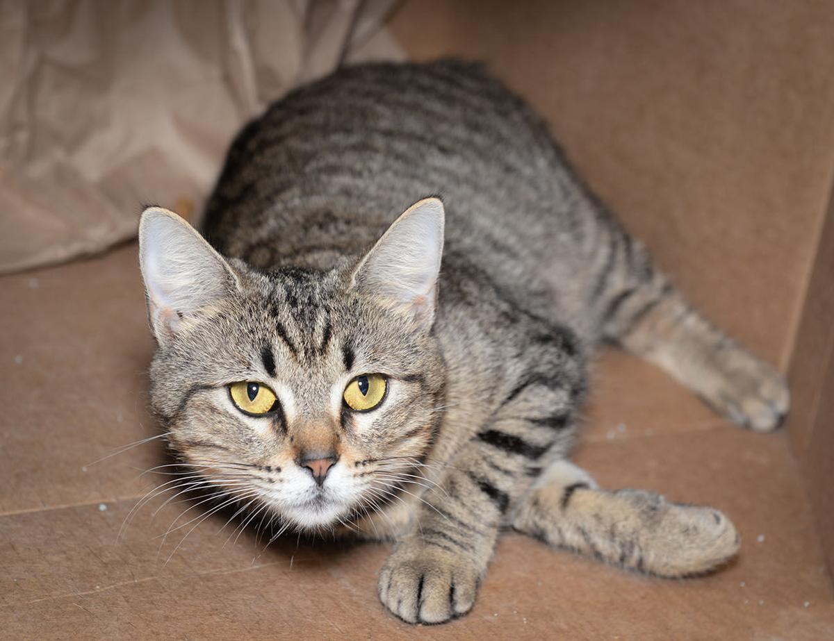 Cat Haven Primrose.jpg