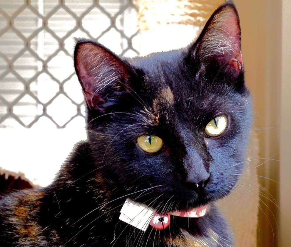 West Feliciana pets available for Feb. 4, 2016 _lowres