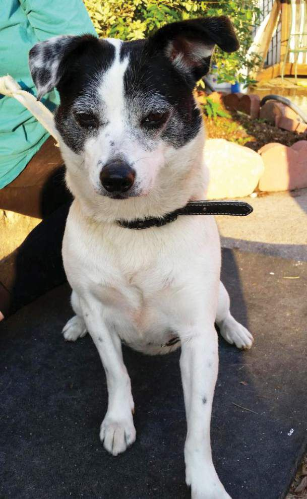 Animal Rescue: Volunteers needed to get La. shelter pets to safety _lowres