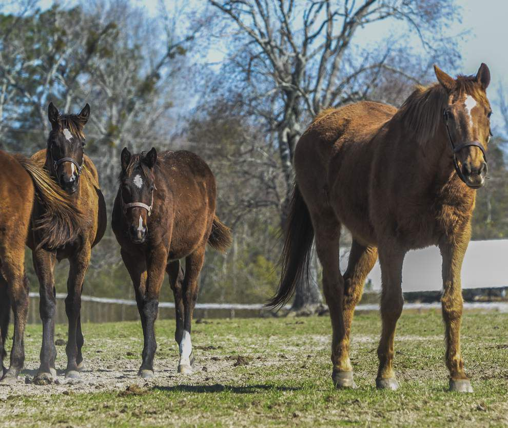Louisiana Horse Rescue Association's mission: A good home for every horse _lowres