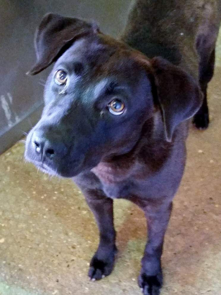 Ascension Parish pets available for June 5, 2014 _lowres