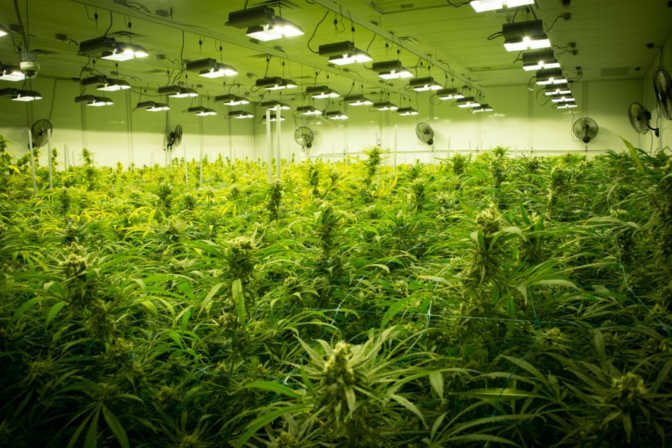 Medical marijuana pharmacies set to open throughout Louisiana, possibly within months