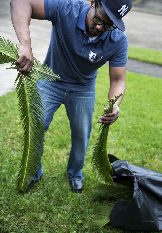 Where do palms for Palm Sunday come from? Some are home-grown, some imported _lowres