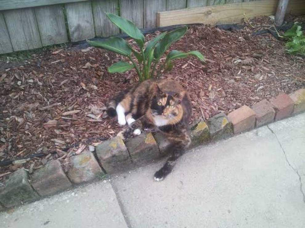 Paw-some news: Zoey the WhoCat found safe, reunited with owner, reports say _lowres