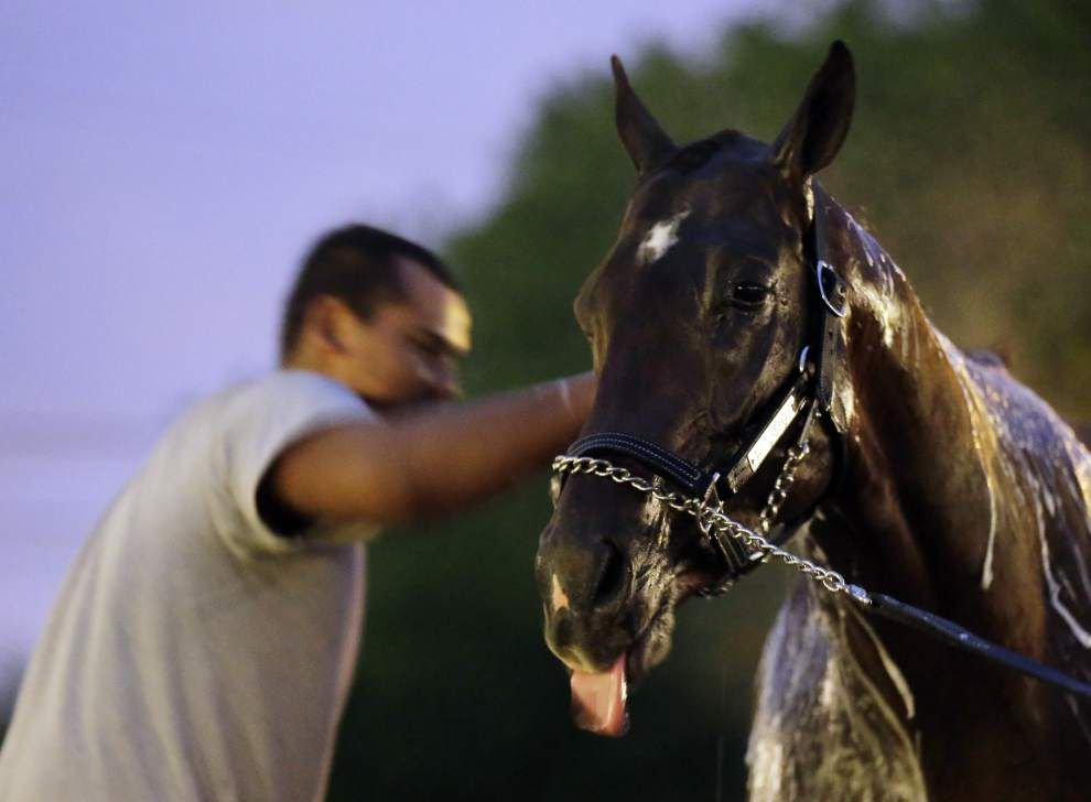 Louisiana-bred Vicar's in Trouble draws Derby rail _lowres