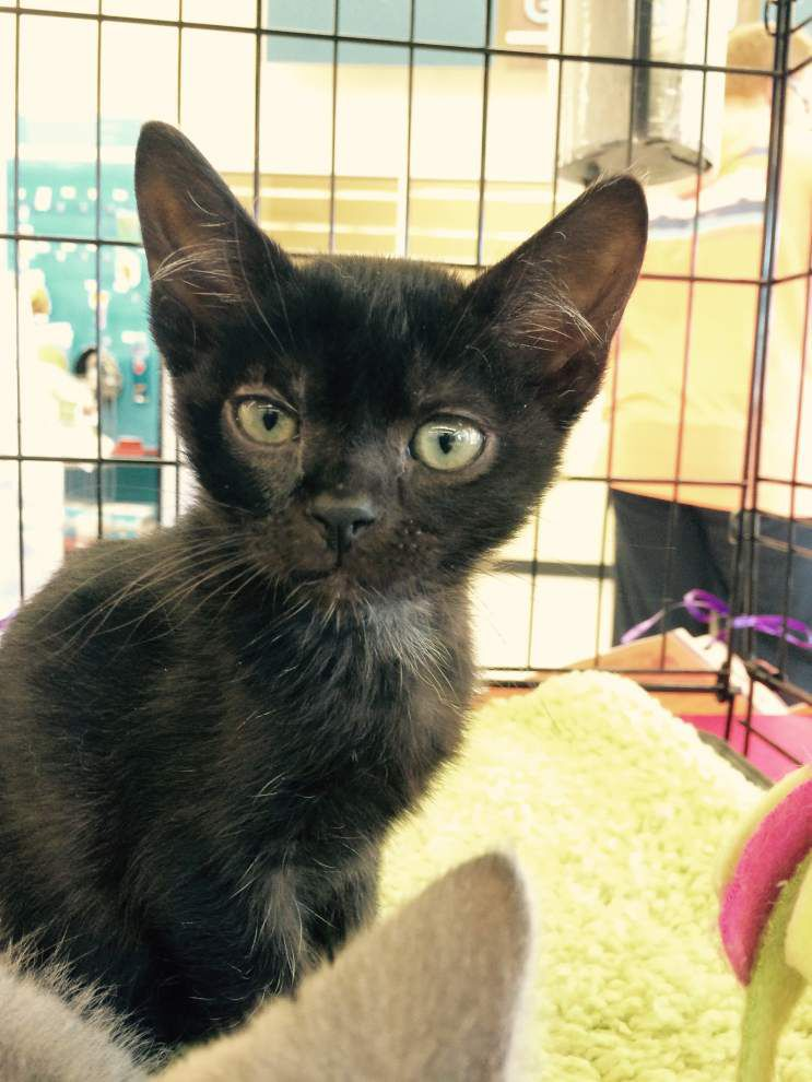 Southside cats available for April 16, 2015 _lowres