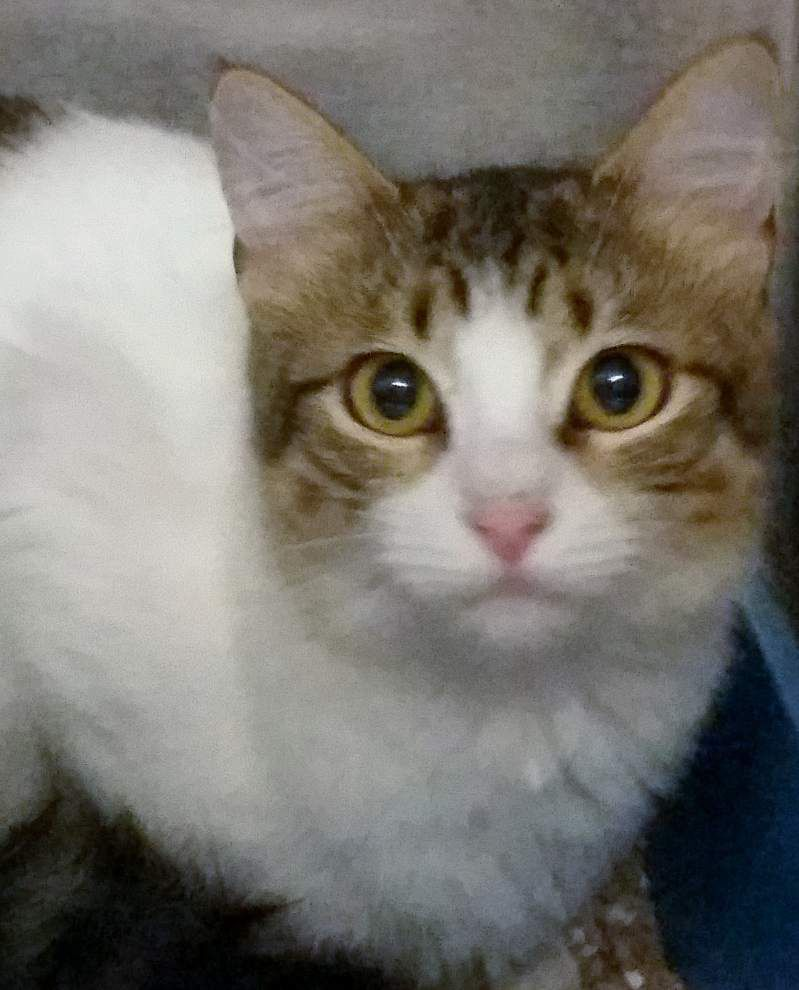 Ascension Parish pets available for Aug. 14, 2014 _lowres