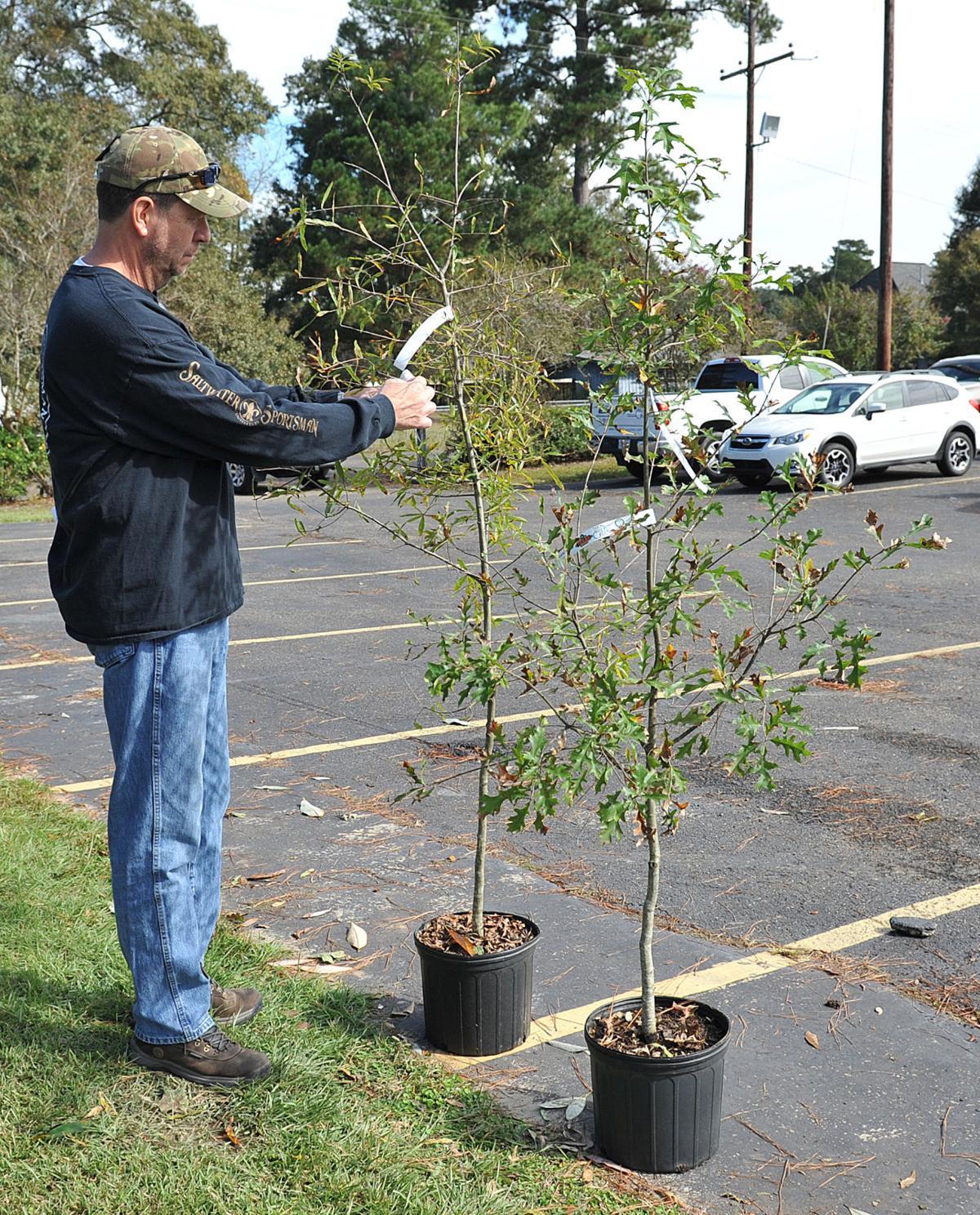 treeslt110217 3.jpg