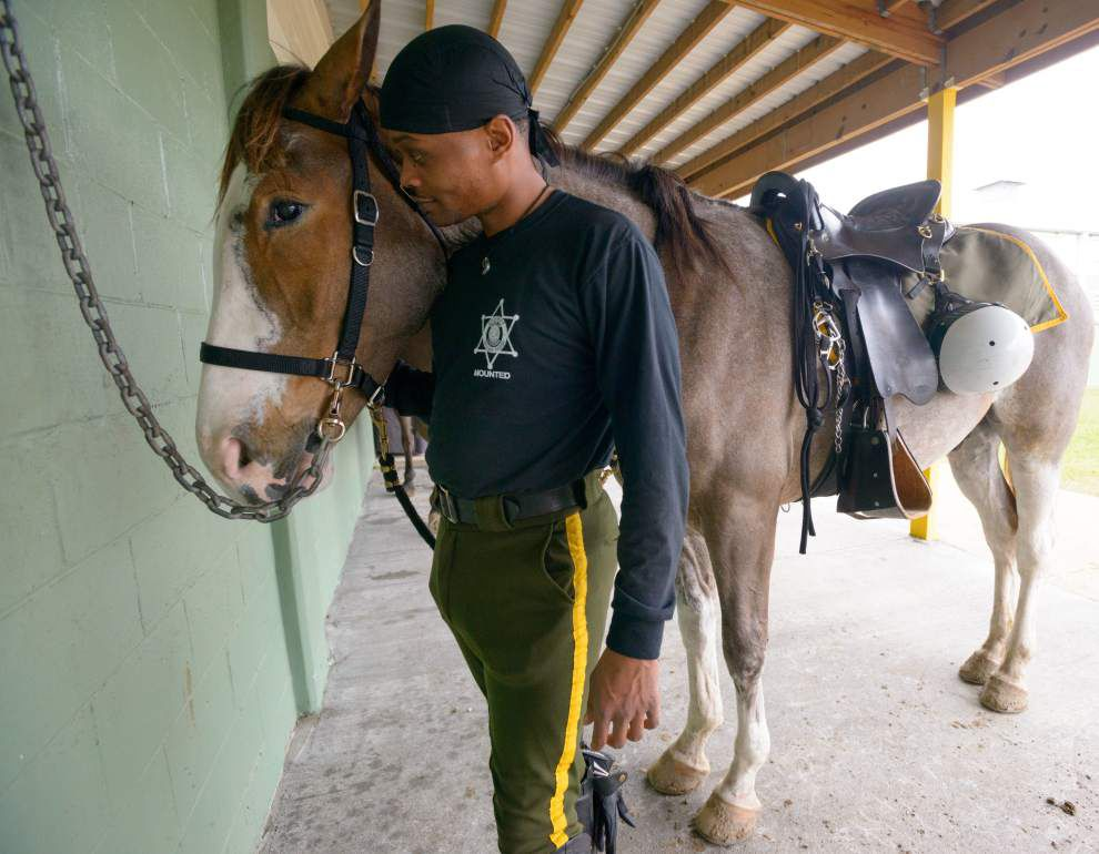 Photos: NOPD mounted horse training _lowres