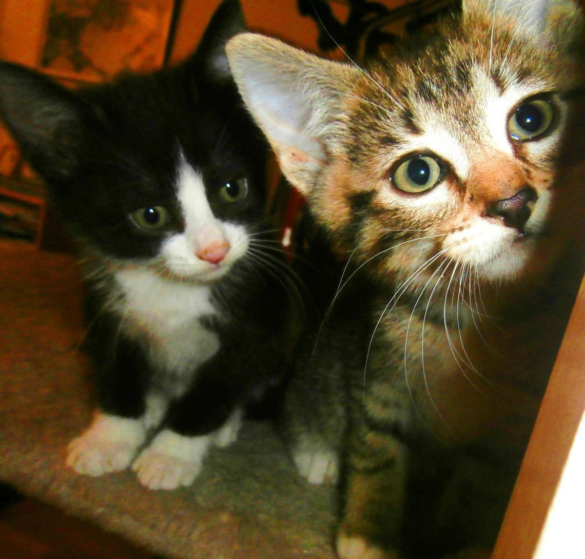 Crescent City Cat Club, Marigny cat cafe, opens Nov. 4_lowres