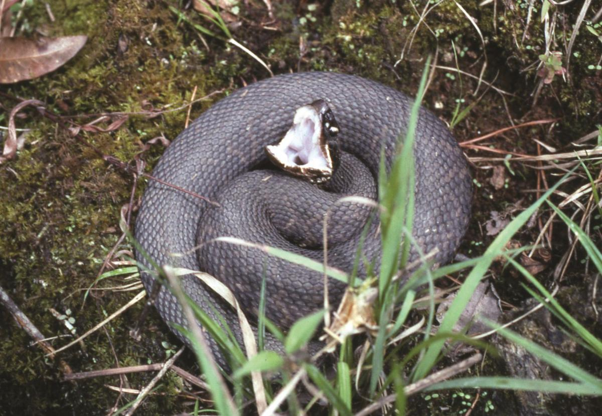 9 things a Louisiana herpetologist thinks you should know about