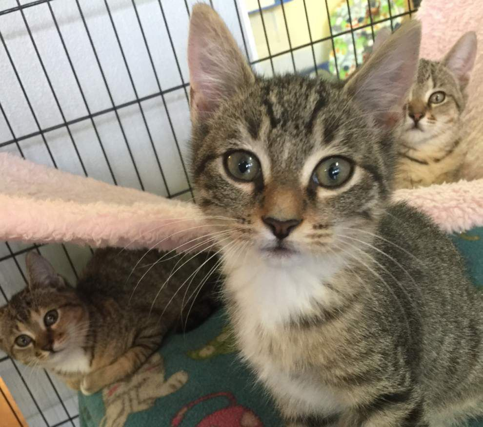 Mid City cats available for Dec. 3, 2015 _lowres
