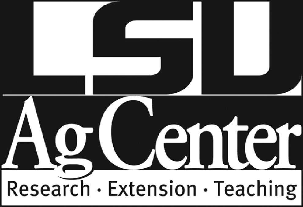 LSU AgCenter Garden News: Sweet corn can thrive in home gardens _lowres