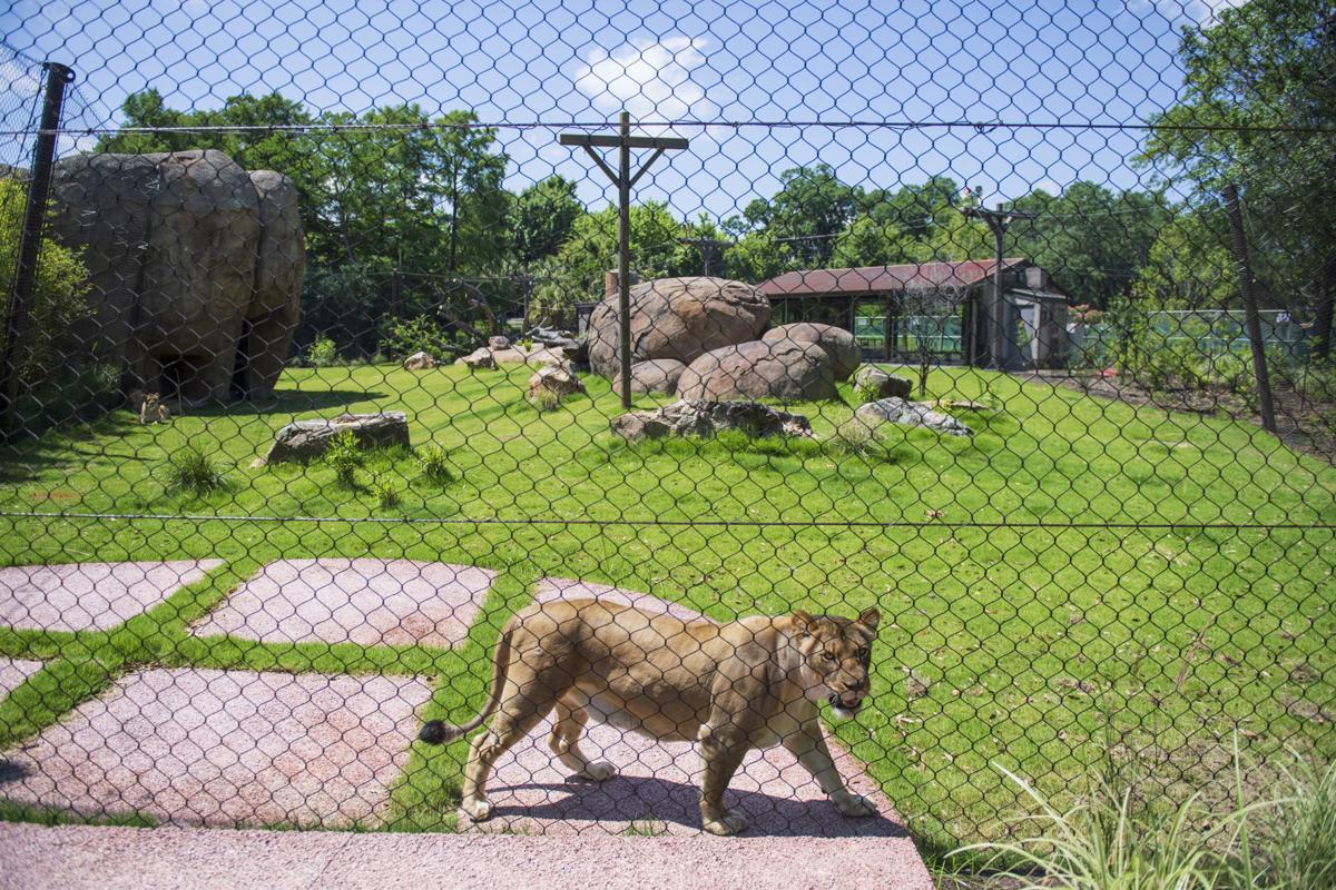 NO.liontour.051819_2.JPG