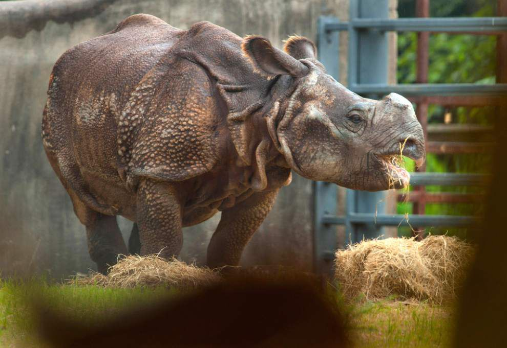 Video: Indian Rhino on exhibit at the Baton Rouge Zoo _lowres