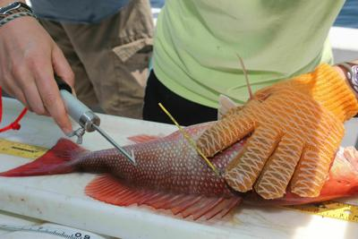 Red Snapper $250 Tags