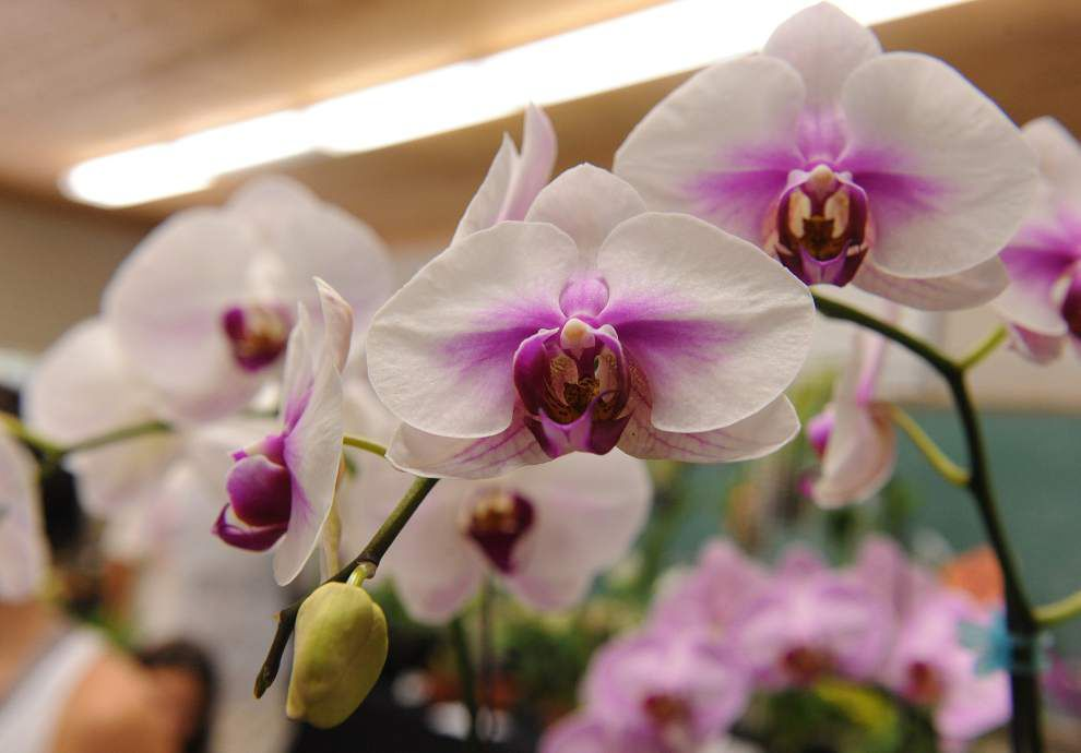 At orchid workshop, get expert advice in speed-dating style _lowres