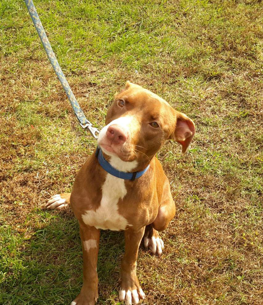 East Feliciana pet available for Dec. 17, 2015 _lowres