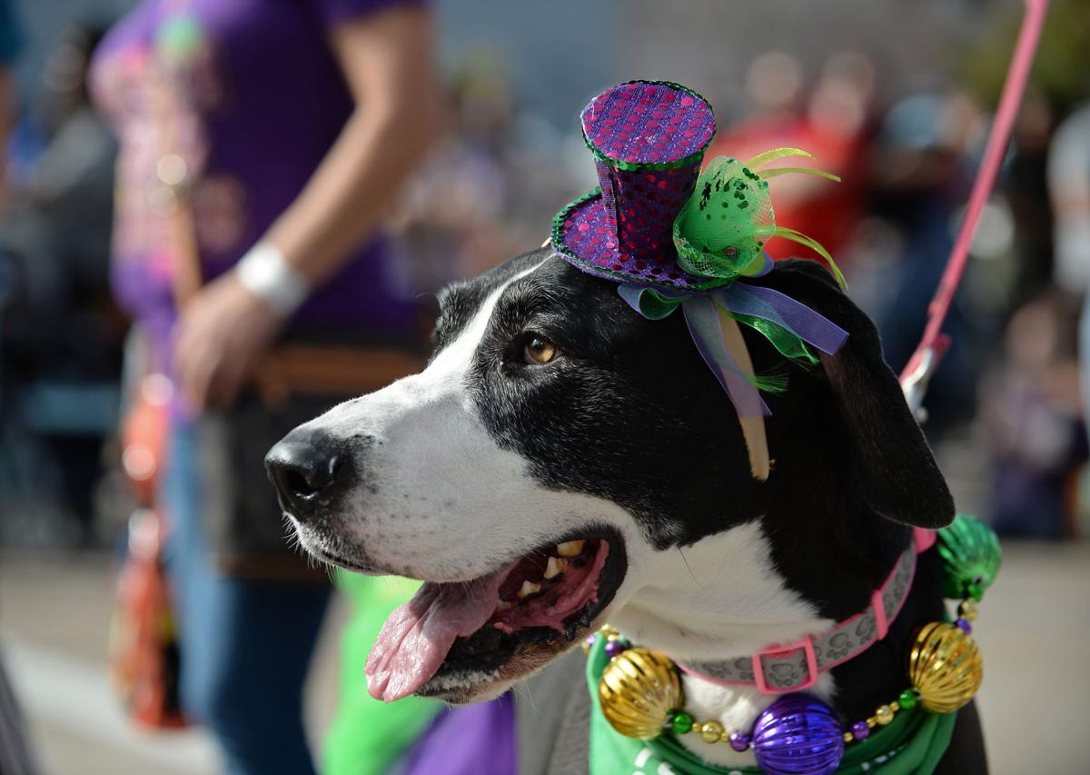 KreweofMutts657.jpg copy for Red