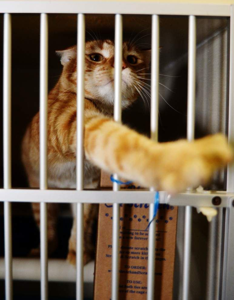 Lafayette eyeing 'no kill' shelter options — 4 of every 5 cats, half of all dogs taken in at shelter last year euthanized _lowres