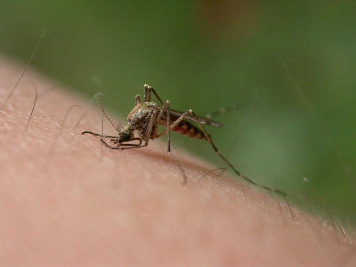 West Nile virus discovered in New Orleans_lowres