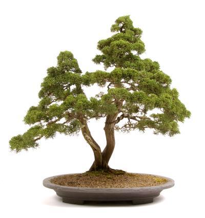 bonsai_4.jpg (copy)