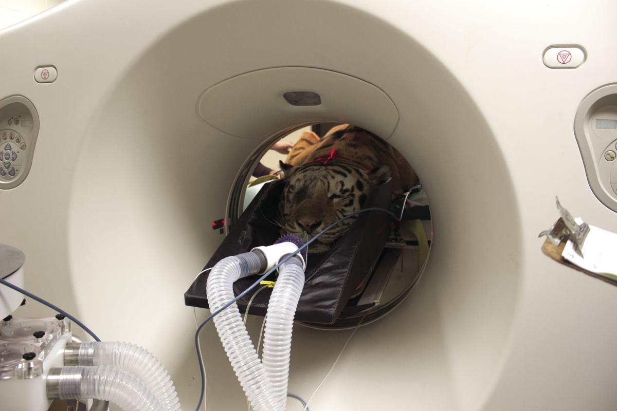 Mike CT scan.jpg