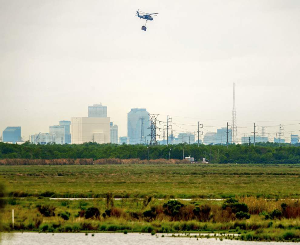 Photos: Recycled Christmas trees from Orleans Parish create new wetland habitat _lowres