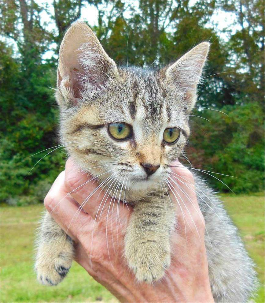 West Feliciana pets for Nov. 13, 2014 _lowres